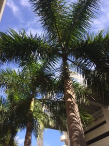 Florida has many palms.